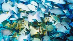 Vissen compositie